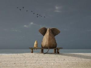 Elephant SOC