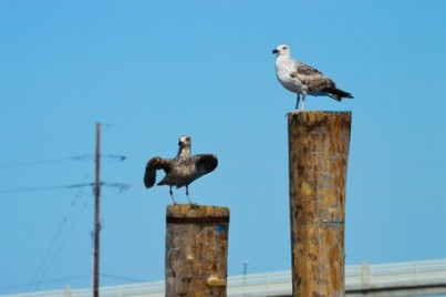 Two seagulls on posts in Atlantic Highlands along the Jersey shore