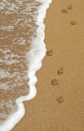 9014866 - four isolated dog paw footprints in the sand on a beach