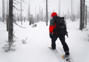 16101862 - man goes through the woods on snowshoes
