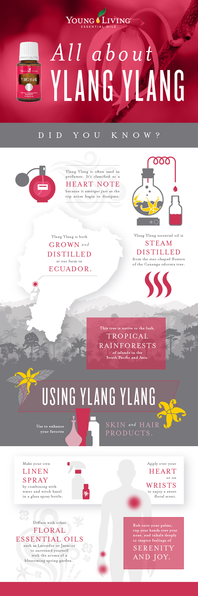 blog_AllAboutYlangYlang_infographic_US-01-1