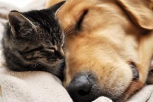 13579196 - animal friendship