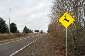 6132858 - deer elk crossing road sign in a contry rura street road