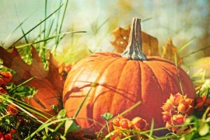 10628342 - small pumpkin in the grass with vintage color feeling
