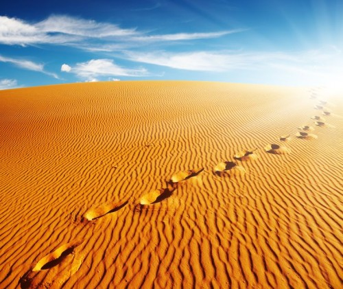 13746672 - footprints on sand dune, sahara desert, algeria