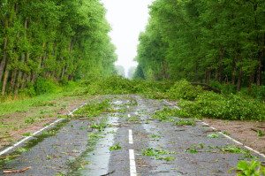 26959623 - after hurricane. fallen trees willow on road
