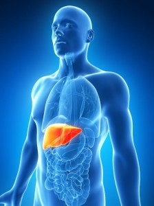 18071269 - 3d rendered illustration of the male liver