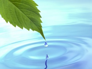 13906408 - drop fall from leaf on ripple water  3d