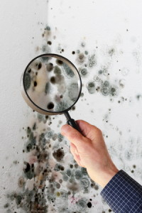 36488492 - a man with magnifying glass checking mold fungus