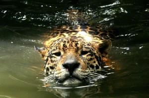 3545831 - leopard in natural habitat