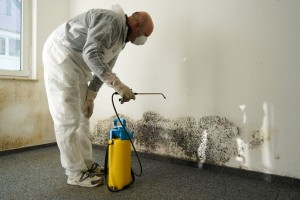 57670940 - specialist in combating mold in an apartment