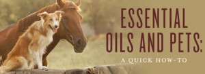 YL Essential Oils and Pets blog