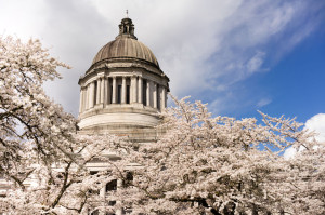 Washington State Capital Building Olympia Springtime Cherry Blos